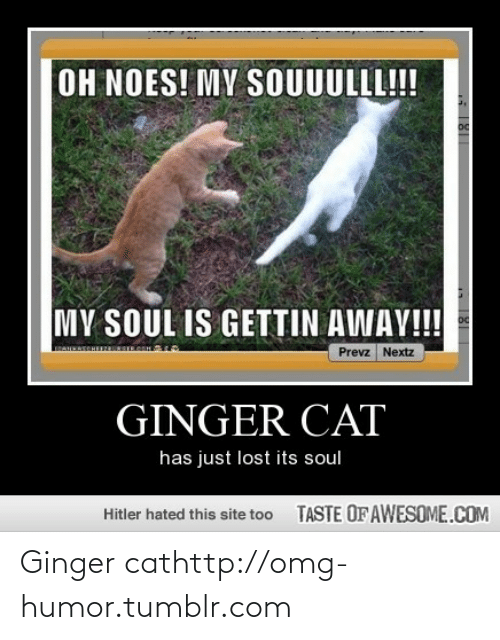 Noes: OH NOES! MY SOUUULLL!  MY SOUL IS GETTIN AWAY!!!  oc  Prevz Nextz  GINGER CAT  has just lost its soul  TASTE OFAWESOME.COM  Hitler hated this site too Ginger cathttp://omg-humor.tumblr.com