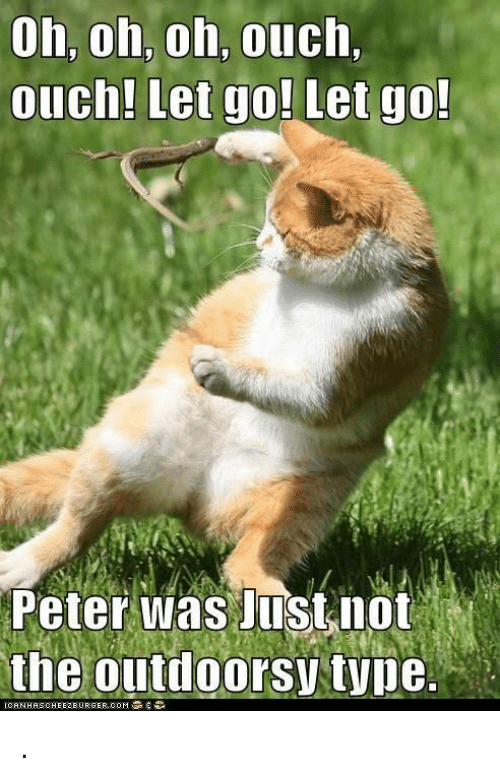 cheezburger: oh, oh, oh, ouch  ouch! Let go! Let go  Peter was Justnot  ICA N HAS CHEEZBURGER, COM .