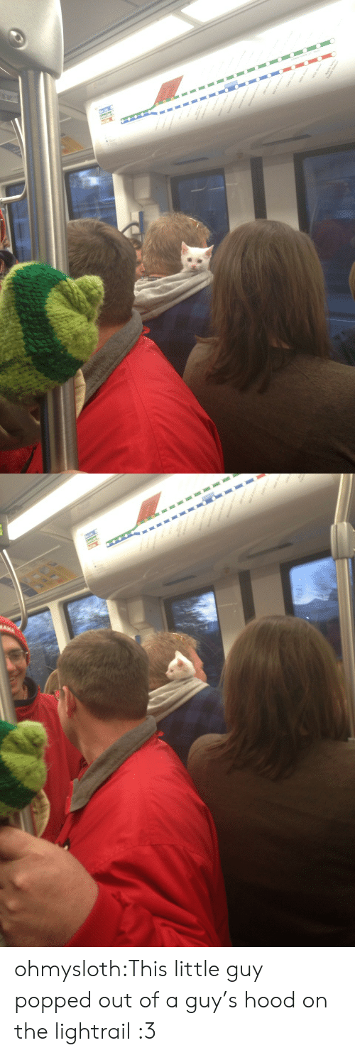 Target, Tumblr, and Blog: ohmysloth:This little guy popped out of a guy's hood on the lightrail :3