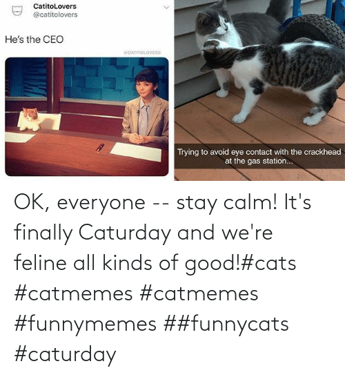 OK: OK, everyone -- stay calm! It's finally Caturday and we're feline all kinds of good!#cats #catmemes #catmemes #funnymemes ##funnycats #caturday