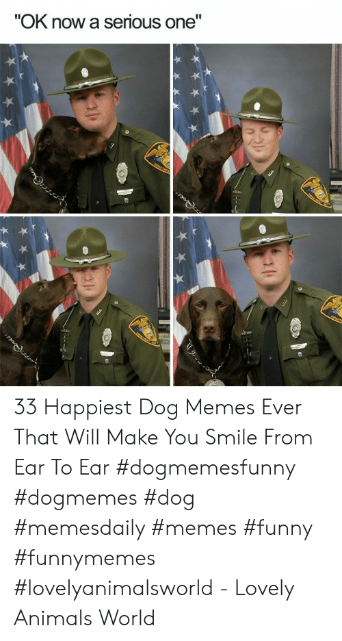 """Animals, Funny, and Memes: """"OK now a serious one"""" 33 Happiest Dog Memes Ever That Will Make You Smile From Ear To Ear #dogmemesfunny #dogmemes #dog #memesdaily #memes #funny #funnymemes #lovelyanimalsworld - Lovely Animals World"""
