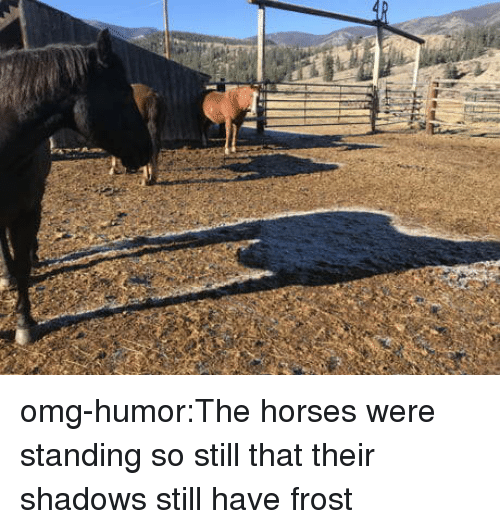 Horses, Omg, and Tumblr: omg-humor:The horses were standing so still that their shadows still have frost