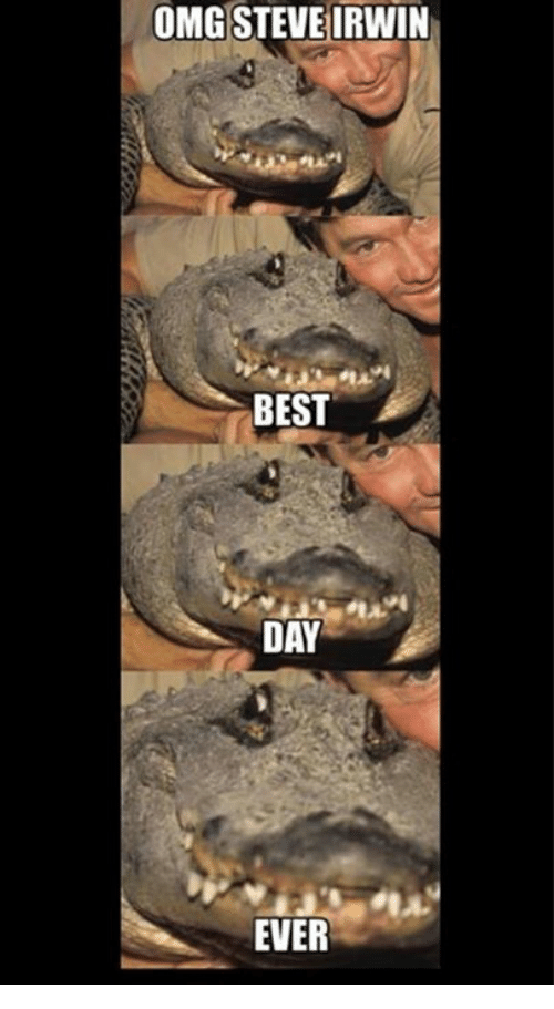 omg steve irwin best day ever 5034177 🇲🇽 25 best memes about best day ever best day ever memes