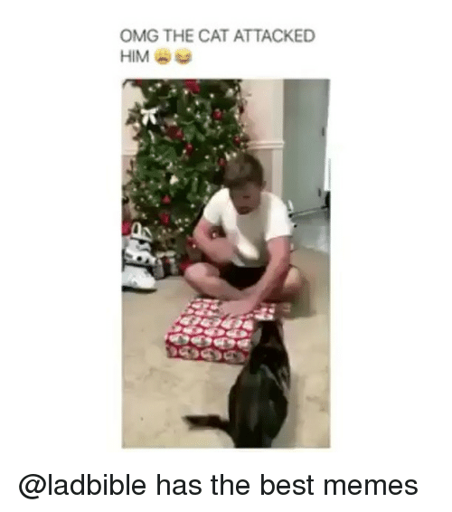 Funny, Memes, and Omg: OMG THE CAT ATTACKED  HIM @ladbible has the best memes