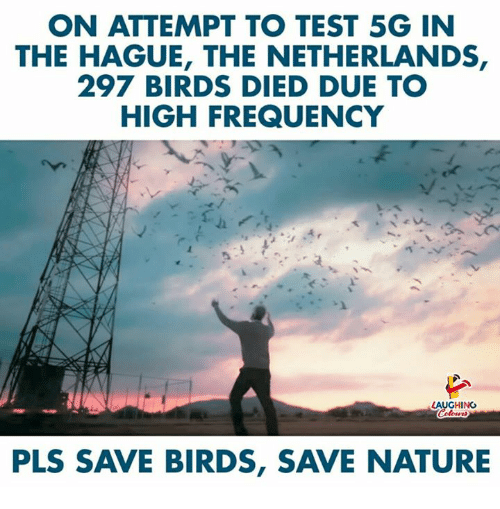 Birds, Nature, and Netherlands: ON ATTEMPT TO TEST 5G IN  THE HAGUE, THE NETHERLANDS,  297 BIRDS DIED DUE TO  HIGH FREQUENCY  LAUGHING  PLS SAVE BIRDS, SAVE NATURE