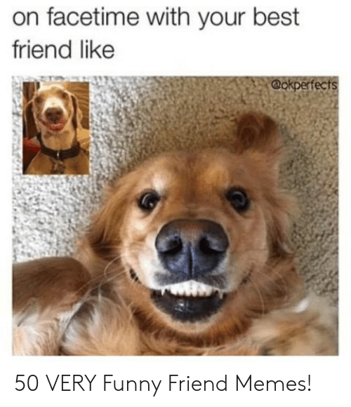 Best Friend, Facetime, and Funny: on facetime with your best  friend like  @okperfects 50 VERY Funny Friend Memes!