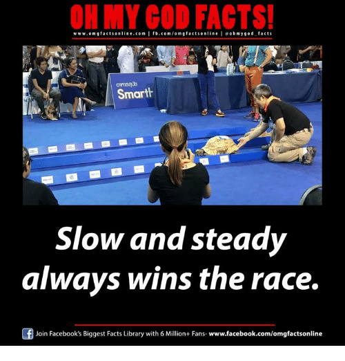 wins-the-race: ON MY GOD FACTS!  www.om facts online.com I fb.com/om g facts on  l e ohmygod facts  Smarth  Slow and steady  always wins the race.  Join Facebook's Biggest Facts Library with 6 Million+ Fans  www.facebook.com/omgfactsonline