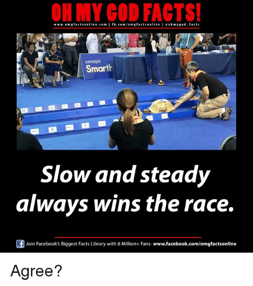 wins-the-race: ON MY GOD FACTS!  www.om facts online.com I fb.com/om g facts on  l e ohmygod facts  Smarth  Slow and steady  always wins the race.  Join Facebook's Biggest Facts Library with 6 Million+ Fans  www.facebook.com/omgfactsonline Agree?
