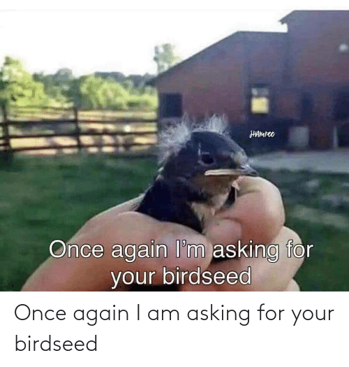Asking For: Once again I am asking for your birdseed