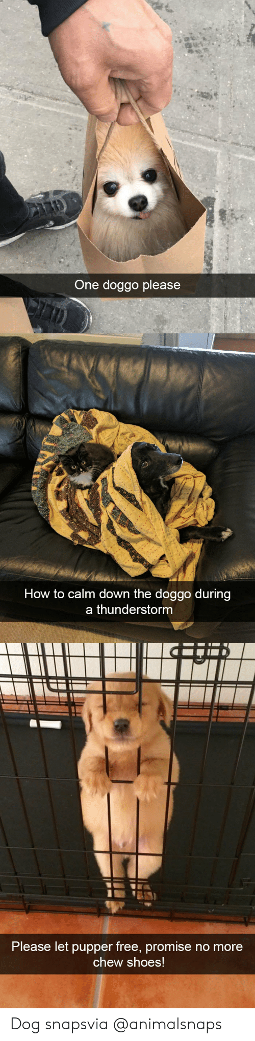 Shoes, Target, and Tumblr: One doggo please   How to calm down the doggo during  a thunderstorm   Please let pupper free, promisern  o more  chew shoes! Dog snapsvia @animalsnaps