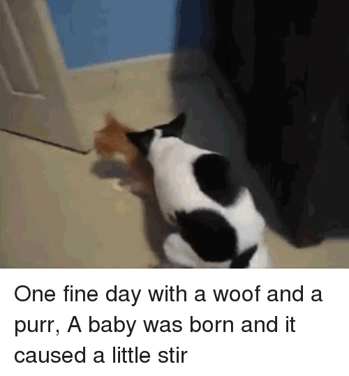 Baby, One, and Day: One fine day with a woof and a purr, A baby was born and it caused a little stir