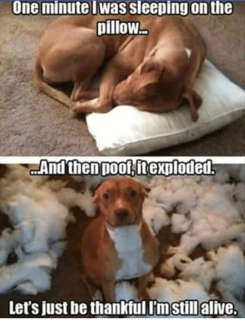 Poofes: One minute I Was Sleeping on the  pillow  And then poof it exploded  Let's just be thankfullmstill alive.