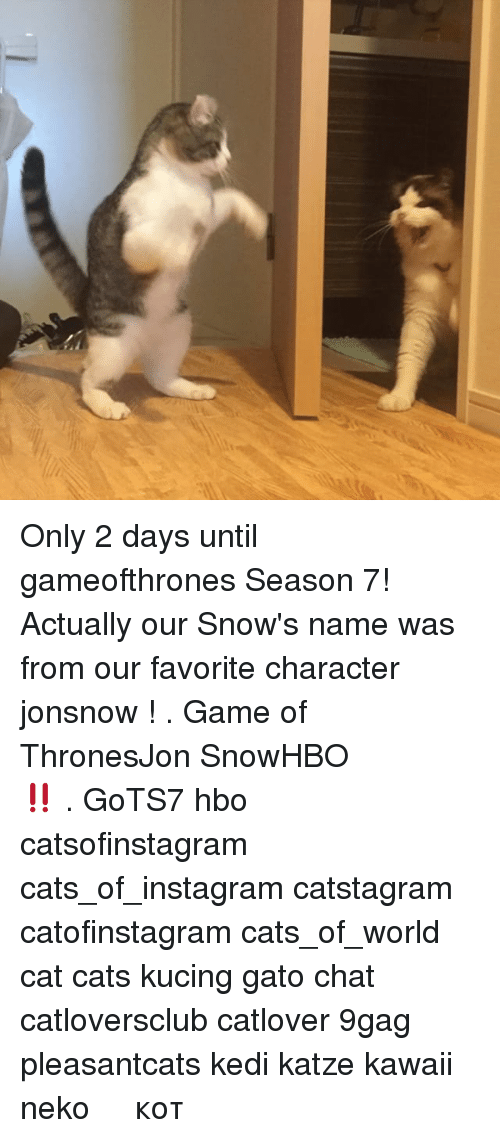 9gag, Cats, and Hbo: Only 2 days until gameofthrones Season 7! Actually our Snow's name was from our favorite character jonsnow ! . スノーくんは、ドラマ「Game of Thrones」にある、パパとママが一番好きな登場人物Jon Snowの名前で名付けられました。いよいよ、明後日HBOがシーズン7の放送をスタートします!ワクワク‼️ . GoTS7 hbo catsofinstagram cats_of_instagram catstagram catofinstagram cats_of_world cat cats kucing gato chat catloversclub catlover 9gag pleasantcats kedi katze kawaii neko 고양이 кот แมว 猫