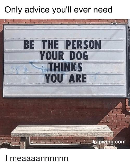 Kapwing: Only advice vou'll ever need  BE THE PERSON  YOUR DOG  THINKS  YOU ARE  kapwing.com I meaaaannnnnn