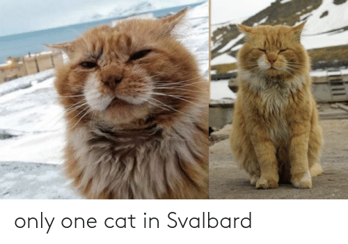 svalbard: only one cat in Svalbard