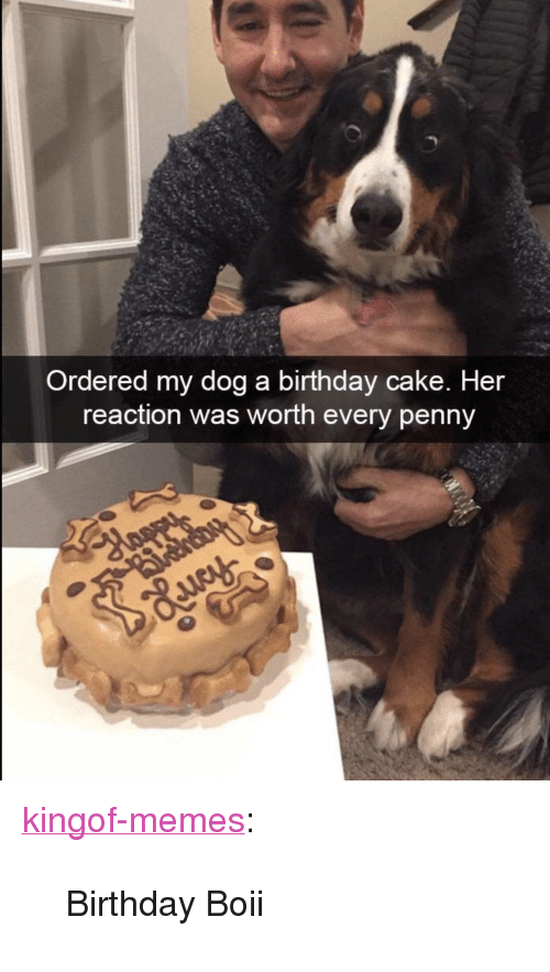 "Boii: Ordered my dog a birthday cake. Her  reaction was worth every penny <p><a href=""https://kingof-memes.tumblr.com/post/163705352411/birthday-boii"" class=""tumblr_blog"">kingof-memes</a>:</p>  <blockquote><p>Birthday Boii</p></blockquote>"