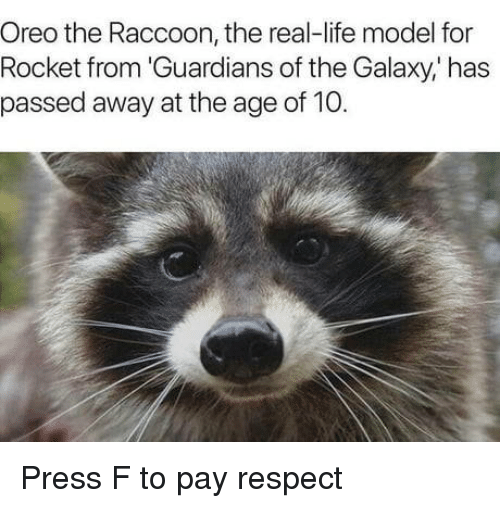 Guardians: Oreo the Raccoon, the real-life model for  Rocket from 'Guardians of the Galaxy,' has  passed away at the age of 10. Press F to pay respect