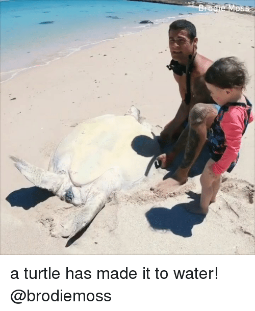 Memes, Turtle, and Water: OS a turtle has made it to water! @brodiemoss