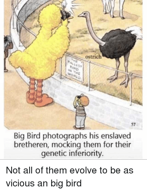 Evolve, Big Bird, and Vicious: ostrich  57  Big Bird photographs his enslaved  bretheren, mocking them for their  genetic inferiority Not all of them evolve to be as vicious an big bird