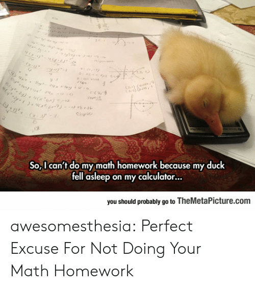 Calculator: otrux24  Cay (  e (s,9  Clipio  2  So,I can't do my math homework because my duck  fell asleep on my calculator...  you should probably go to TheMetaPicture.com awesomesthesia:  Perfect Excuse For Not Doing Your Math Homework