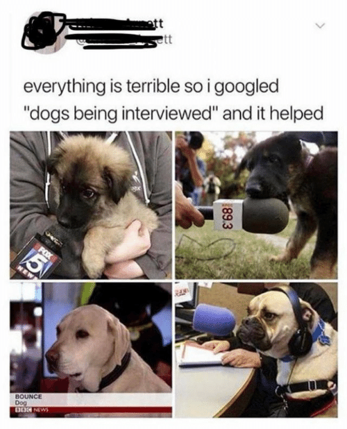 """bounce: ott  everything is terrible so i googled  """"dogs being interviewed"""" and it helped  BOUNCE  Dog  DOG NEWS  89.3"""