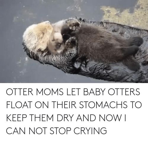 Crying: OTTER MOMS LET BABY OTTERS FLOAT ON THEIR STOMACHS TO KEEP THEM DRY AND NOW I CAN NOT STOP CRYING
