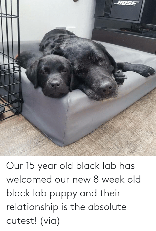 Puppy: Our 15 year old black lab has welcomed our new 8 week old black lab puppy and their relationship is the absolute cutest! (via)