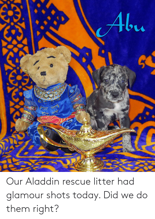 Aladdin: Our Aladdin rescue litter had glamour shots today. Did we do them right?