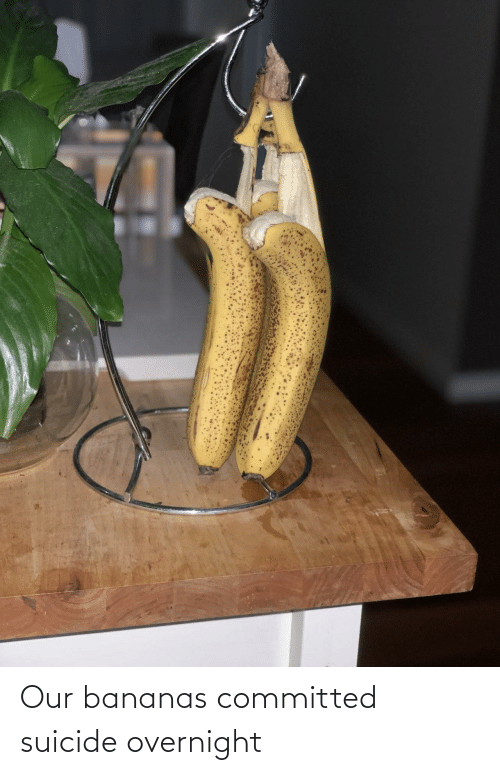 Committed: Our bananas committed suicide overnight