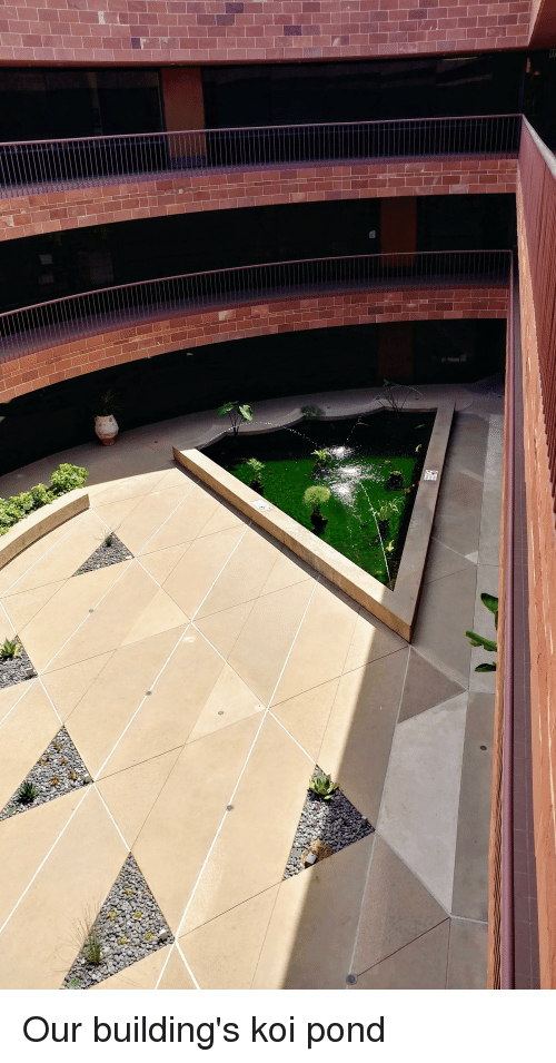 The Office, Koi, and Pond