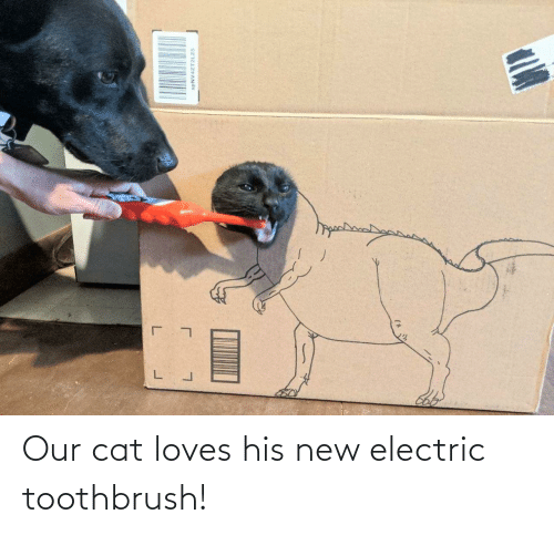 loves: Our cat loves his new electric toothbrush!