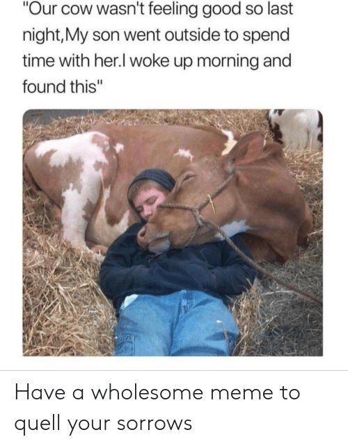 "Meme, Good, and Time: Our cow wasn't feeling good so last  night,My son went outside to spend  time with her.l woke up morning and  found this"" Have a wholesome meme to quell your sorrows"