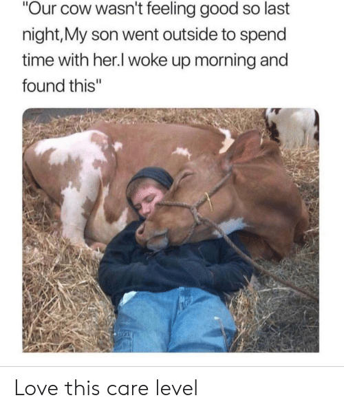 """feeling good: """"Our cow wasn't feeling good so last  night,My son went outside to spend  time with her.I woke up morning and  found this"""" Love this care level"""