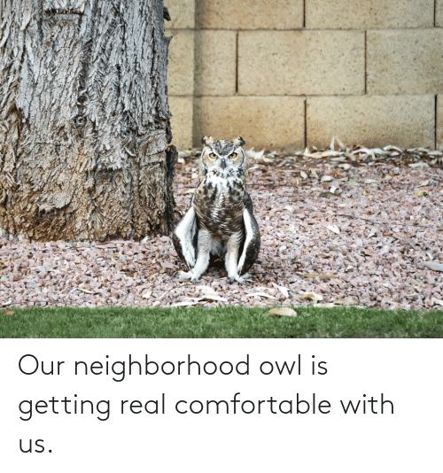 real: Our neighborhood owl is getting real comfortable with us.
