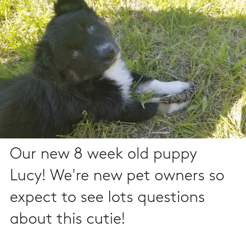 Owners: Our new 8 week old puppy Lucy! We're new pet owners so expect to see lots questions about this cutie!
