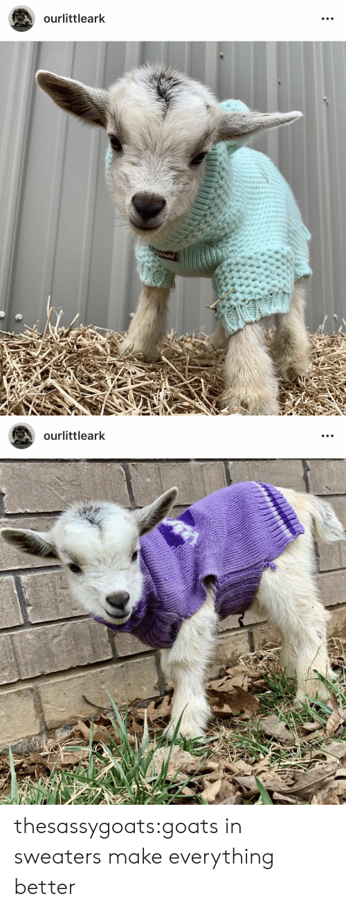 Target, Tumblr, and Blog: ourlittleark   ourlittleark thesassygoats:goats in sweaters make everything better