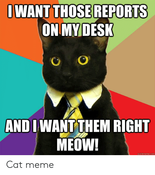 Quickmeme Com: OWANT THOSEREPORTS  ON MY DESK  AND I WANT THEM RIGHT  MEOW!  quickmeme.com Cat meme