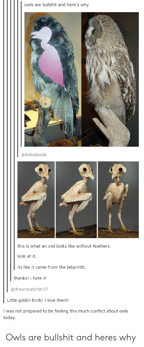 Thanks I Hate It: owls are bullshit and here's why  @dubydoods  this is what an owl looks like without feathers  look at it.  its like it came from the labyrinth.  thanks! i hate it  @drearncatcher37  Little goblin birds!  love them!  I was not prepared to be feeling this much conflict about owls  today. Owls are bullshit and heres why