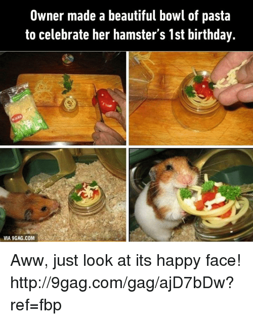 happy faces: Owner made a beautiful bowl of pasta  to celebrate her hamster's 1st birthday.  VIA 9GAG.COM Aww, just look at its happy face! http://9gag.com/gag/ajD7bDw?ref=fbp