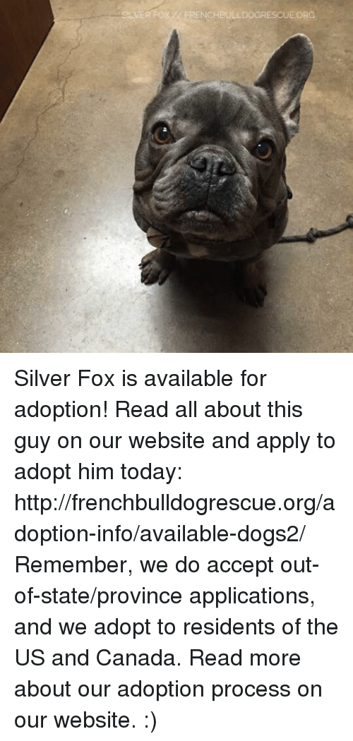 us-and-canada: ox NCHBULLDOGRESCUE ORG Silver Fox is available for adoption! Read all about this guy on our website <location, likes, dislikes> and apply to adopt him today: http://frenchbulldogrescue.org/adoption-info/available-dogs2/  Remember, we do accept out-of-state/province applications, and we adopt to residents of the US and Canada. Read more about our adoption process on our website. :)