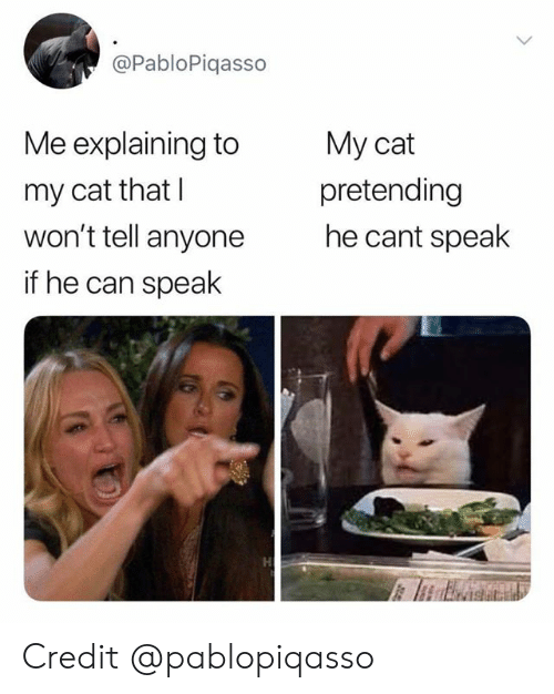 Cat, Can, and Speak: @PabloPiqasso  Me explaining to  My cat  pretending  he cant speak  my cat that I  won't tell anyone  if he can speak Credit @pablopiqasso