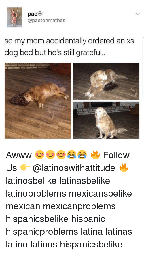 Latinos, Memes, and Mexican: @paetonmathes  so my mom accidentally ordered an xs  dog bed but he's still grateful. Awww 😊😊😊😂😂 🔥 Follow Us 👉 @latinoswithattitude 🔥 latinosbelike latinasbelike latinoproblems mexicansbelike mexican mexicanproblems hispanicsbelike hispanic hispanicproblems latina latinas latino latinos hispanicsbelike
