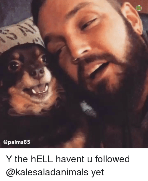 Memes, Hell, and 🤖: @palms8!5 Y the hELL havent u followed @kalesaladanimals yet