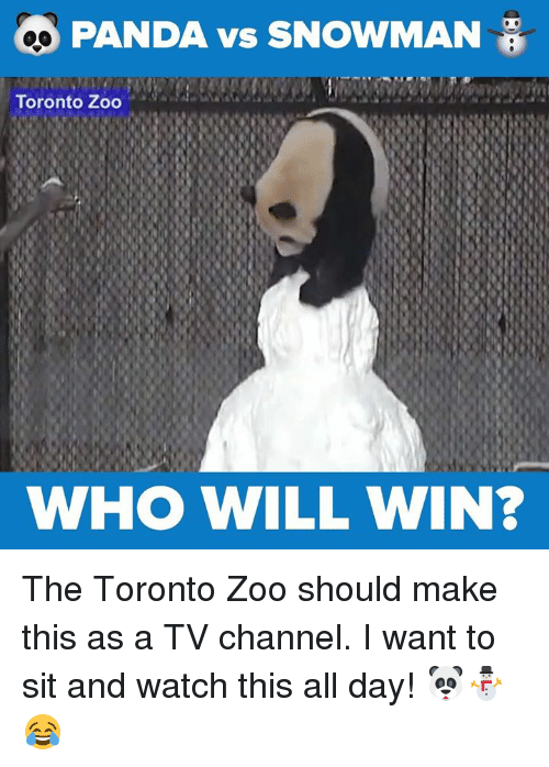 tv channel: PANDA vs SNOWMAN  Toronto Zoo  WHO WILL WIN? The Toronto Zoo should make this as a TV channel. I want to sit and watch this all day! 🐼⛄😂
