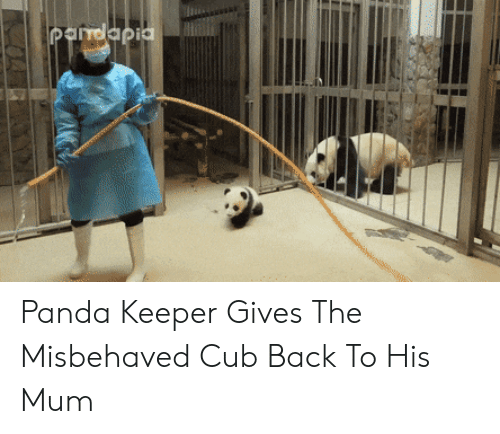Panda: Pandapia Panda Keeper Gives The Misbehaved Cub Back To His Mum