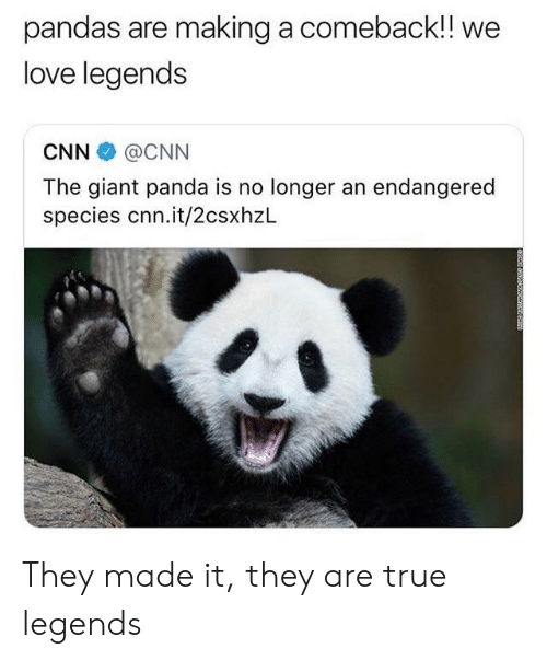 giant panda: pandas are making a comeback!! we  love legends  CNN @CNN  The giant panda is no longer an endangered  species cnn.it/2csxhzL They made it, they are true legends