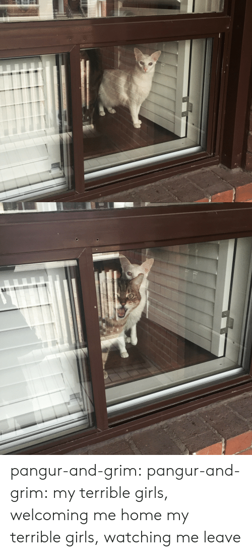 Girls, Tumblr, and Blog: pangur-and-grim:  pangur-and-grim: my terrible girls, welcoming me home my terrible girls, watching me leave