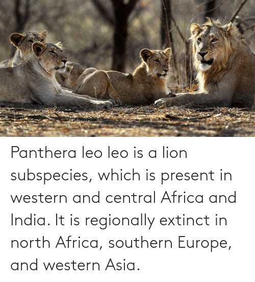 Southern: Panthera leo leo is a lion subspecies, which is present in western and central Africa and India. It is regionally extinct in north Africa, southern Europe, and western Asia.