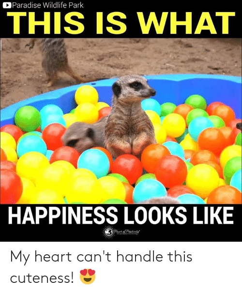 Memes, Paradise, and Heart: Paradise Wildlife Park  THIS IS WHAT  HAPPINESS LOOKS LIKE My heart can't handle this cuteness! 😍