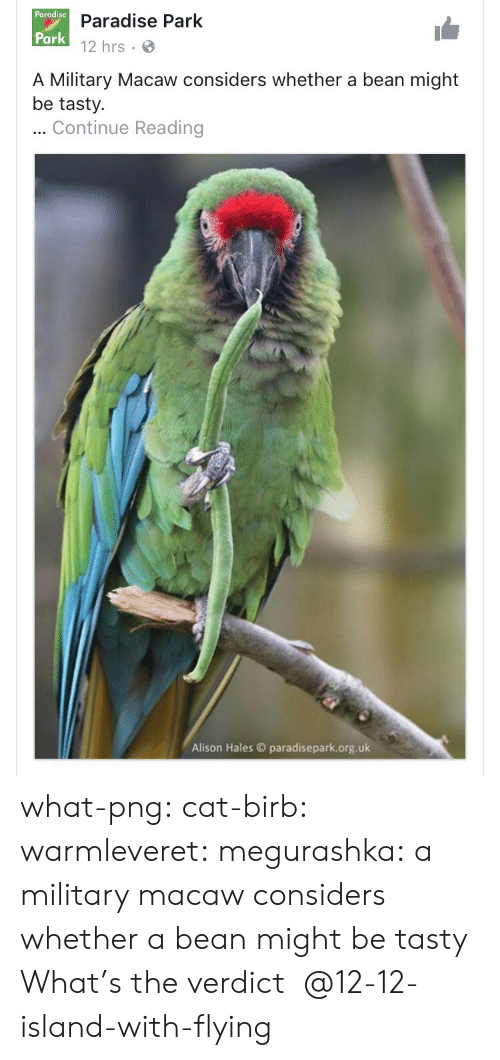 Paradise, Tumblr, and Blog: Pargdise D  Paradise Park  12 hrs  Park  A Military Macaw considers whether a bean might  be tasty.  Continue Reading  Alison Hales paradisepark.org.uk what-png:  cat-birb: warmleveret:  megurashka: a military macaw considers whether a bean might be tasty What's the verdict     @12-12-island-with-flying